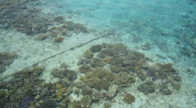 ジャカルタ近郊のビーチリゾート プロウスリブ プトゥリ島日帰/1泊2日