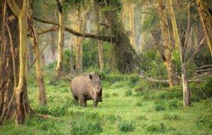 ウジュンクロン国立公園 ウジュン・クロン国立公園 ツアー