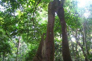 ウジュンクロン  ウジュンクロン国立公園