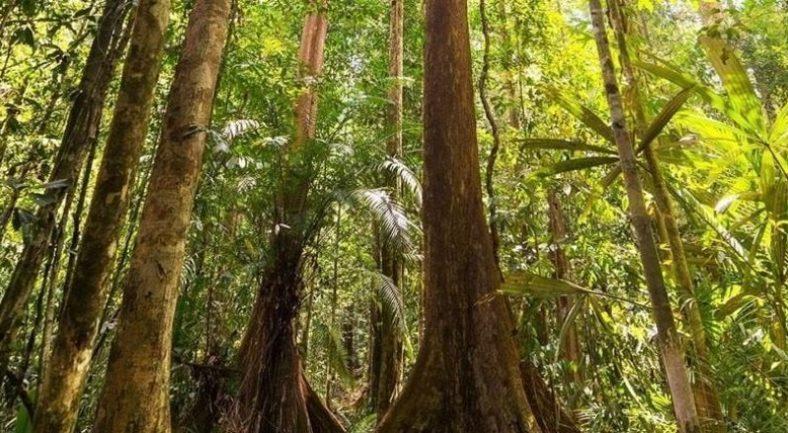 【ジャカルタ発】日帰り ウジュンクロン国立公園 世界遺産へ<往復送迎付き>