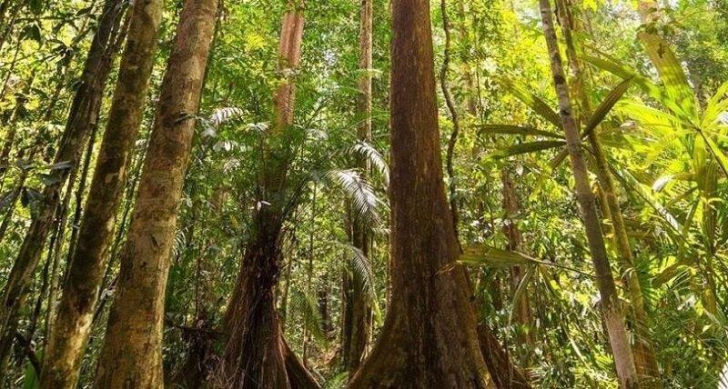 ウジュンクロン国立公園