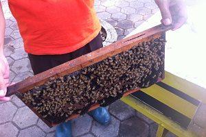 【ジャカルタ発】蜂蜜園巡り/日帰り/IDR550,000