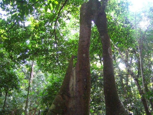 ウジュン・クロン国立公園 ツアー , ウジュン・クロン国立公園 , ウジュンクロン国立公園