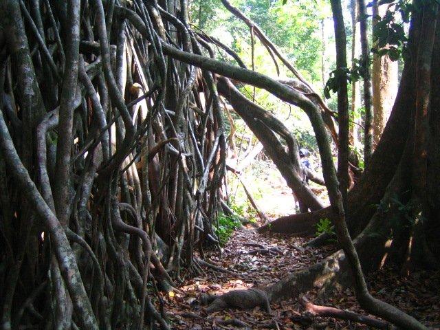 ウジュン・クロン国立公園 , ウジュン・クロン国立公園 ツアー