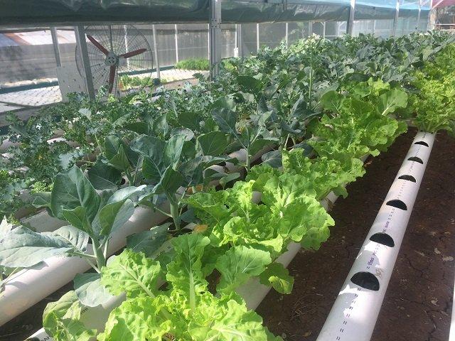 ジャカルタ 野菜 / 野菜農園・収穫体験ツアー